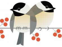 black-capped chickadee, Carolina chickadee